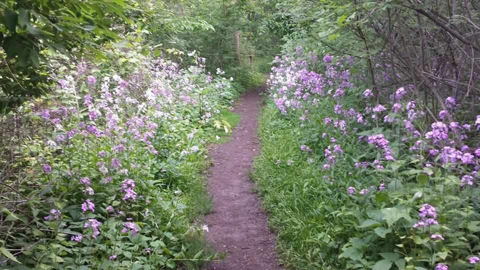 flower trail 2015